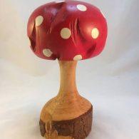 Scots Pine Root (Painted Toadstool)